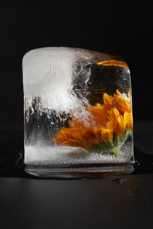 Ice_0355.jpg