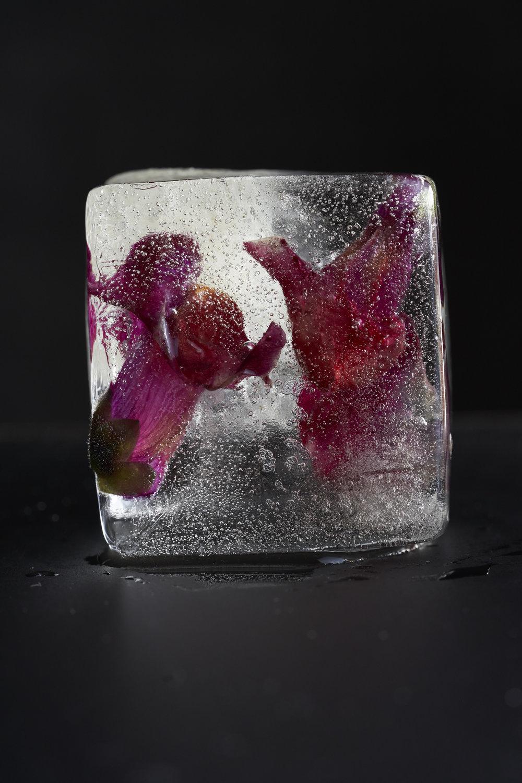 Ice_0366.jpg