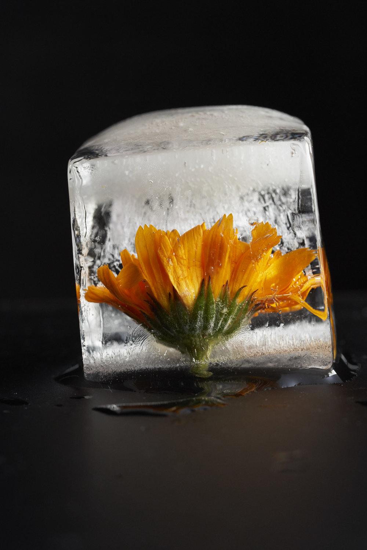 Ice_0367.jpg