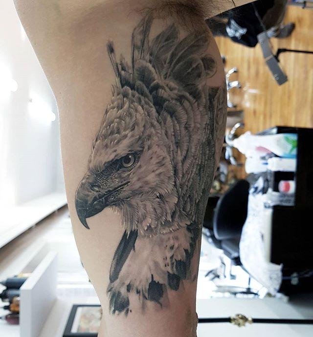 Healed harpy eagle