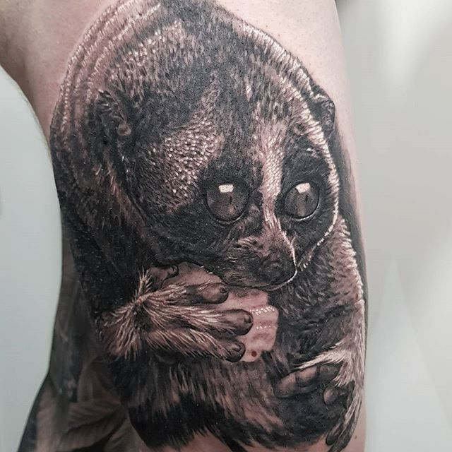 Day one of three on @davejackson78 leg sleeve at the @barcelonatattooexpo  This is a slow Loris, a really cool cute little critter, who has suffered terribly at the hand of the pet trade. Their big eyes and cute mannerisms make them desirable pets, but they do so badly in captivity. They are also one of the only venomous mammals (poachers clip their teeth out with nail clippers to stop them biting) and the cute 'tickling' pose is actually a defensive threat pose. #ticklingistorture #slowloris #barcelona #barcelonatattooconvention #wildlifetattoo #blackandgrey #realism #realismtattoo #norwichtattooist #fivekeystattoo