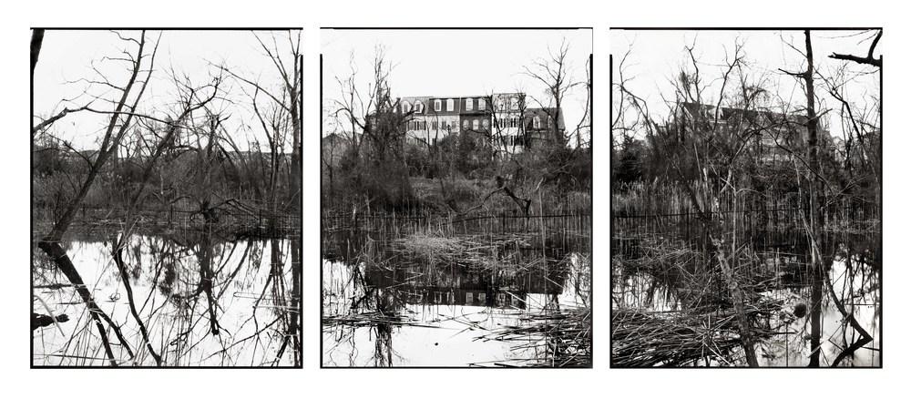 06.Swamp.JPG