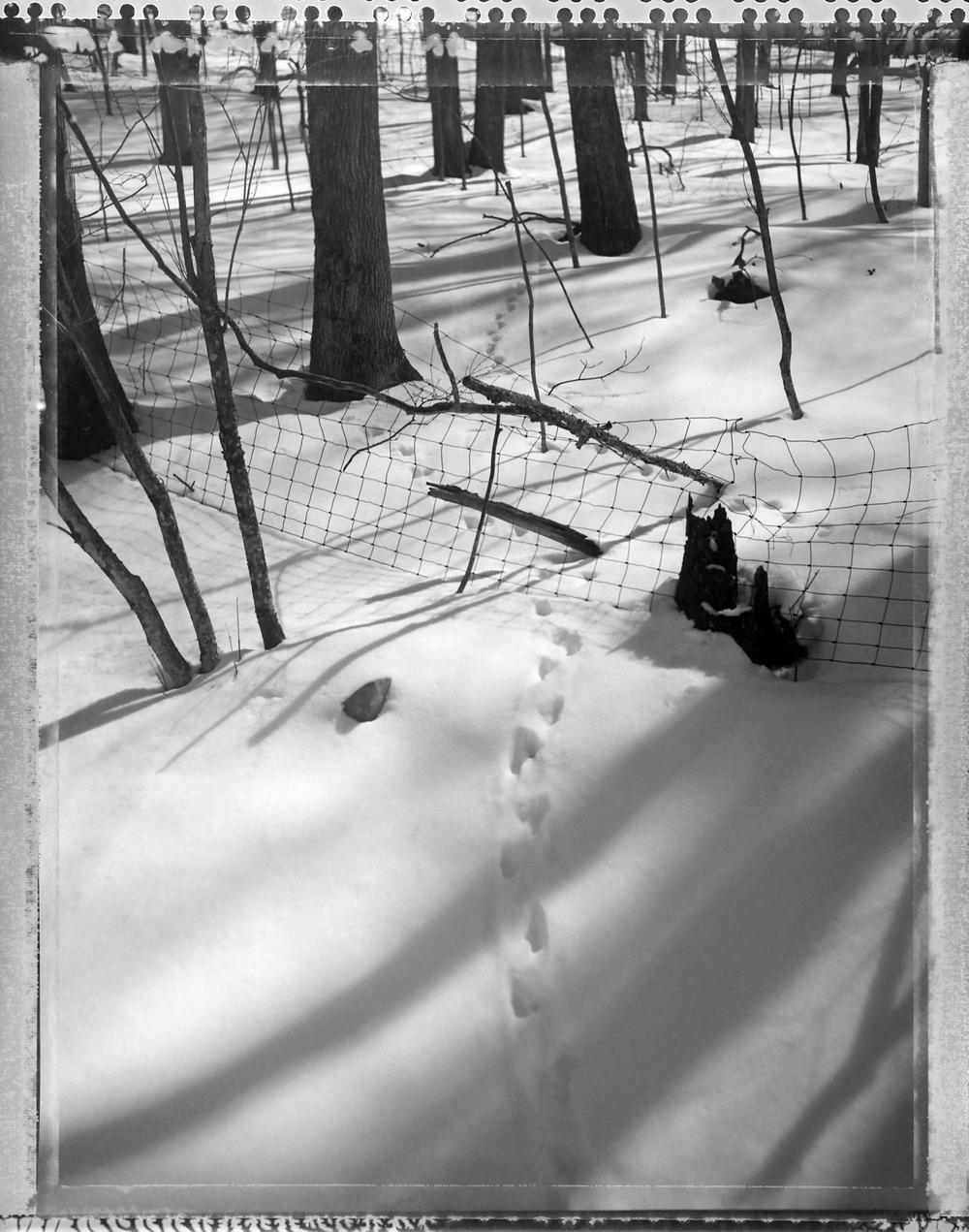 20050319_cru_snowtracks_001.jpg