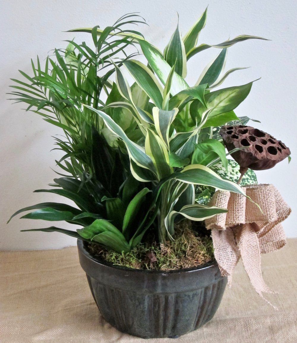 PLANT BASKET of five plants, $35 to $75 sizes. We can add fresh flowers in water pics for more color at a nominal cost.
