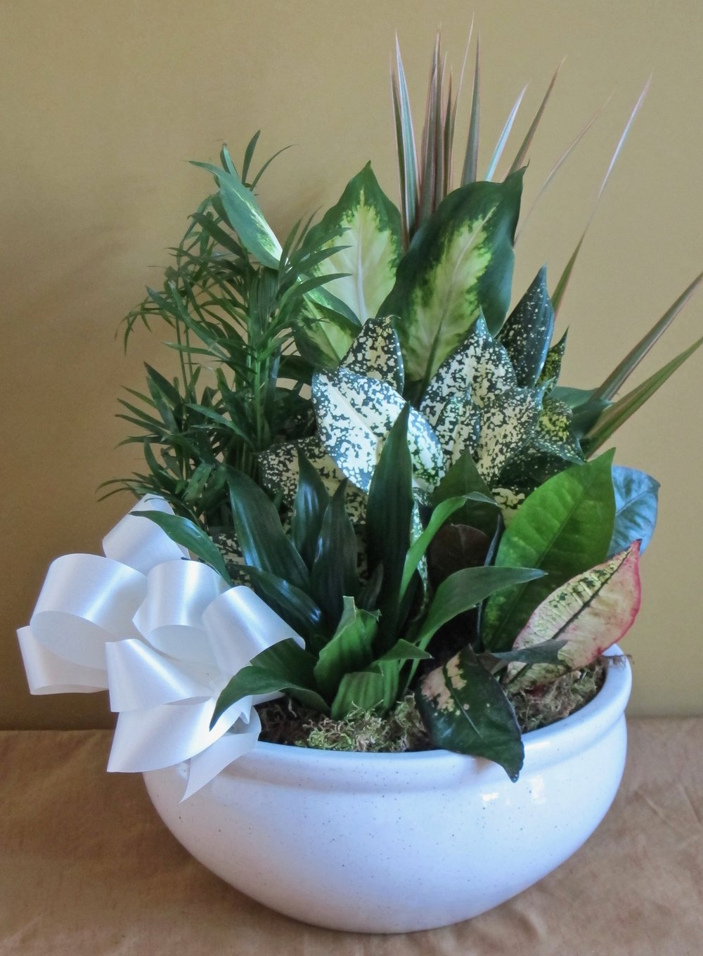 DISH GARDEN in white porcelain vase,18 inches high by 12 inches wide, $48.