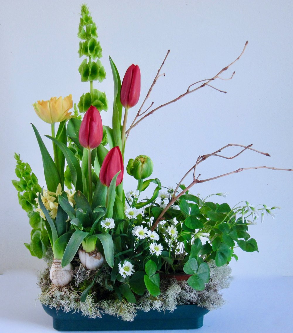 BOTANICAL LANDSCAPES   Bells of Ireland, shamrocks, tulips and hyacinth bulbs make the perfect Irish Spring centerpiece. WE CAN CREATE A THEMED LANDSCAPE FOR ANY OCCASION.