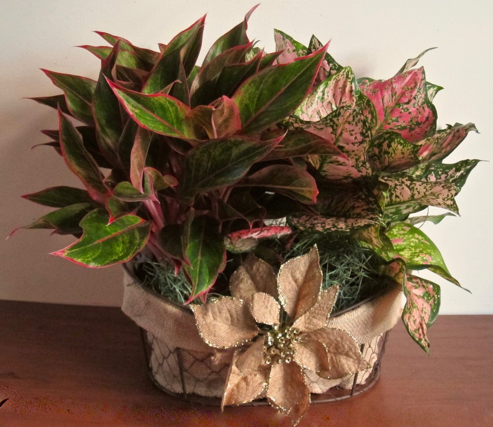 """PLANT BASKET DUO   in a wire burlap-lined basket displays two blooming plants and measures about 20"""" long by 15"""" high tip to tip, $69."""