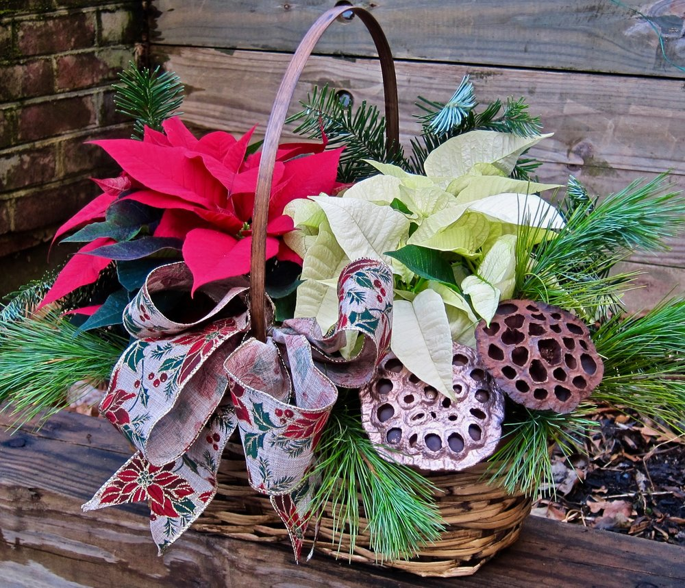 POINSETTIA BASKET, one red and one white with greens, lotus pods, aand a wired burlap designer bow, measures 14 inches wide by 12 inches tall, $49.  .