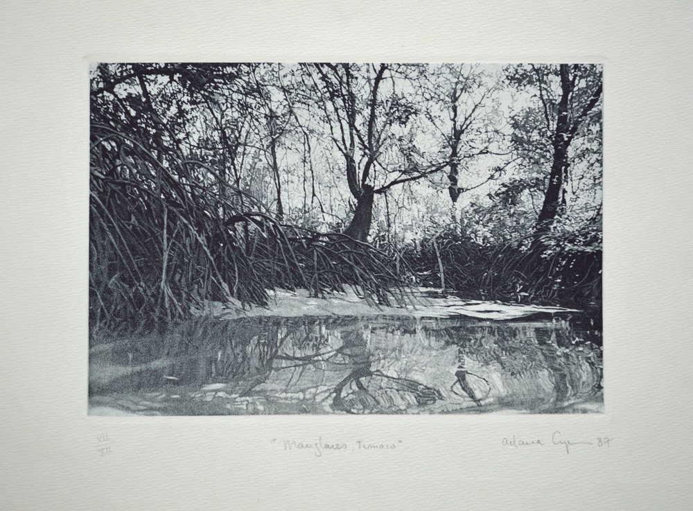 Mangroves, Tumaco, 1987, metal engraving-aquatint, plate 6,49 x 9,44 inches, (16.5 x 24 cm)
