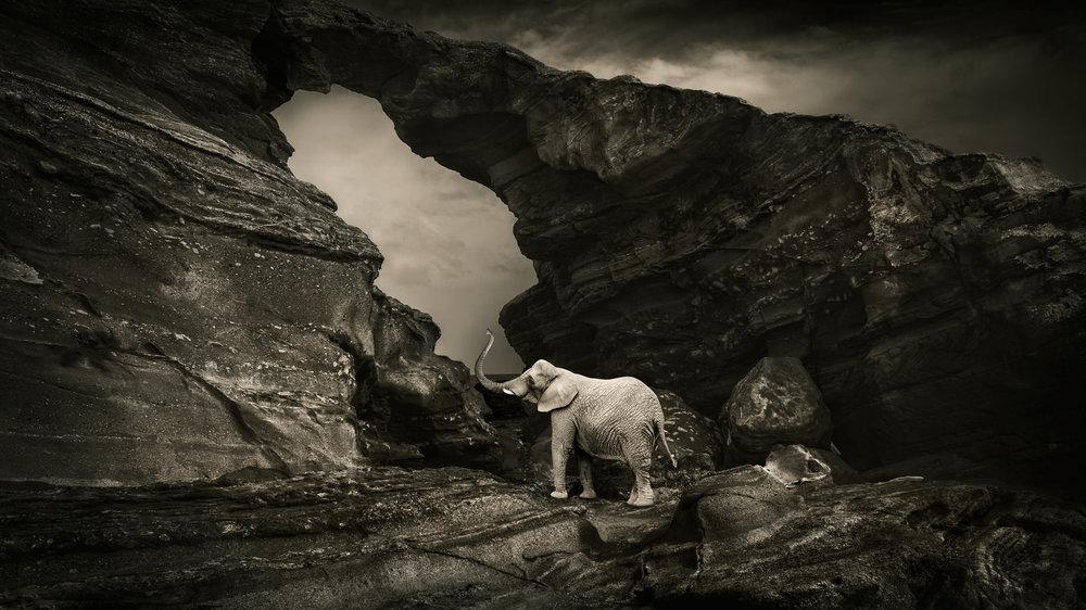 lone_elephant.jpg