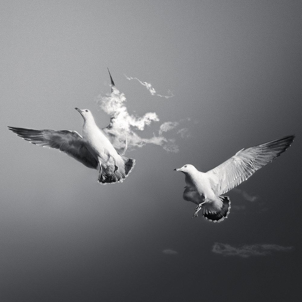 seaguls1.jpg