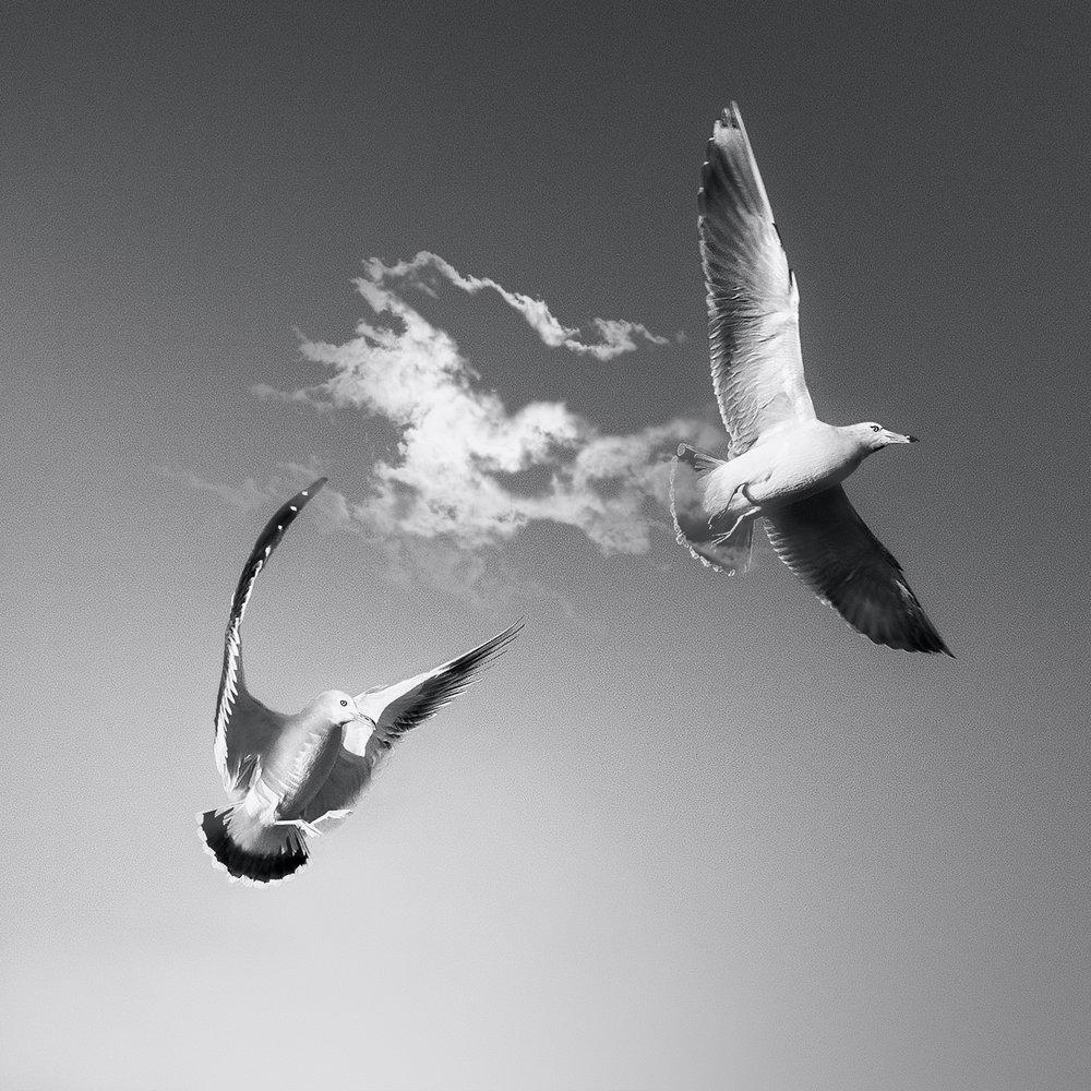 seaguls2.jpg