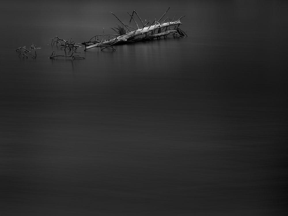 Instagram 3 - White Log Gray - Rodrigo Etcheto.jpg