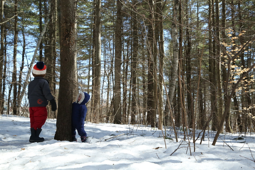 They were knocking on the tree to see if a gnome would emerge.  Or they might be looking for sap, I'm not sure.