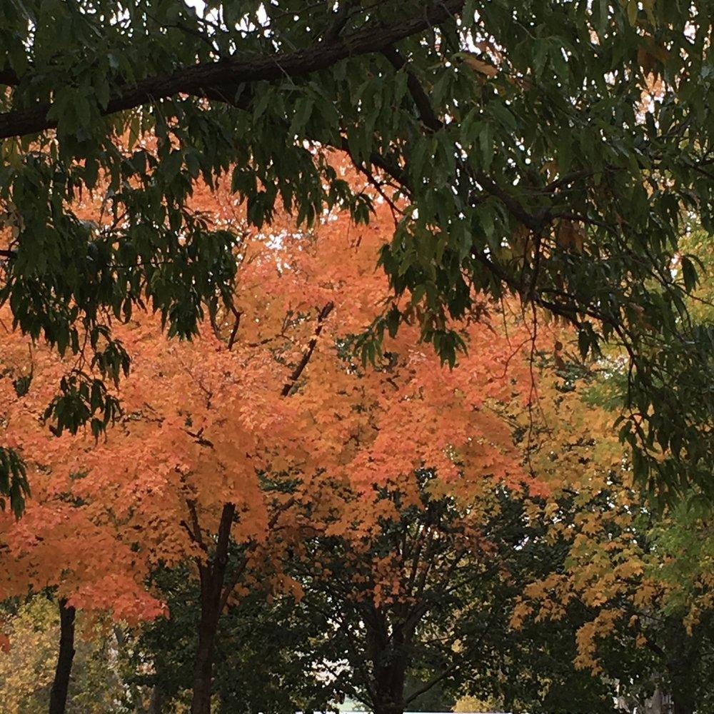 DC Fall Foliage