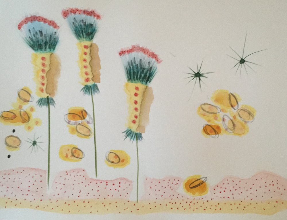 Imaginary plants 2