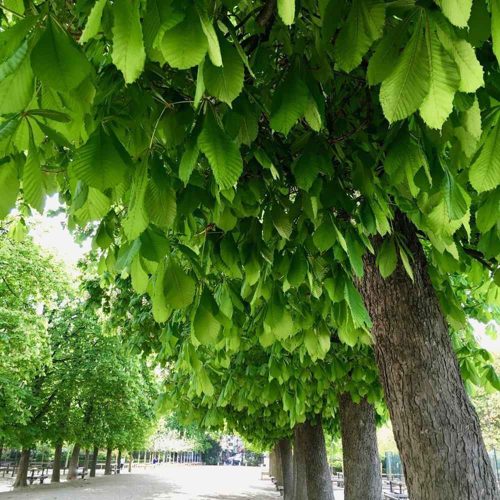 Luxembourg trees.jpg
