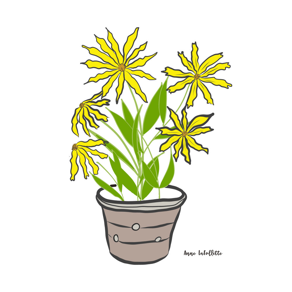 Day-9-Daisies-in-a-pot.jpg