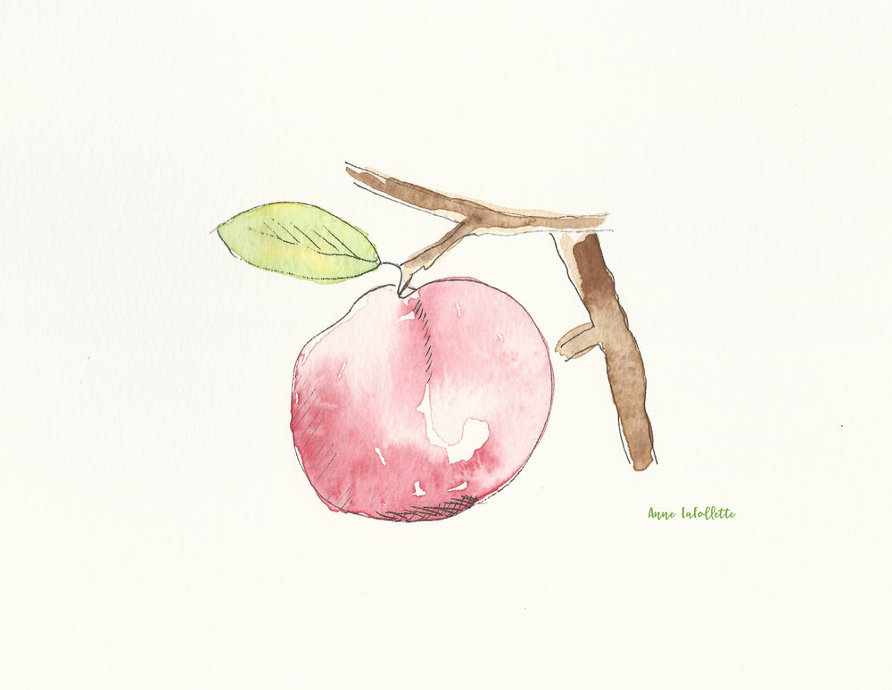 apple watercolor scan.jpg