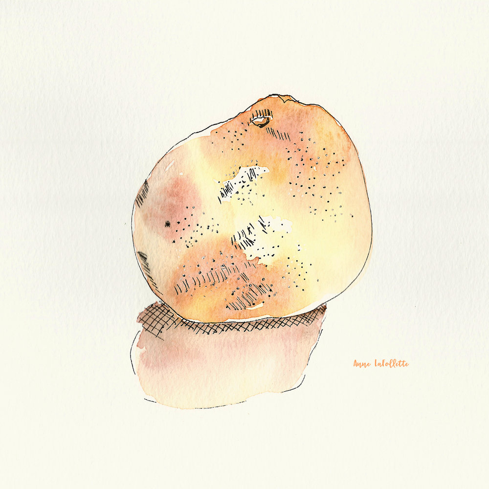 grapefruit watercolor scan with signature.jpg