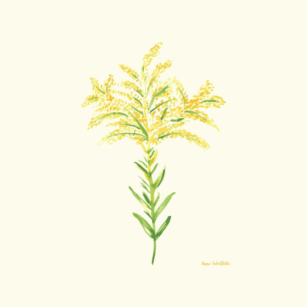 Watercolor-Goldenrod.jpg