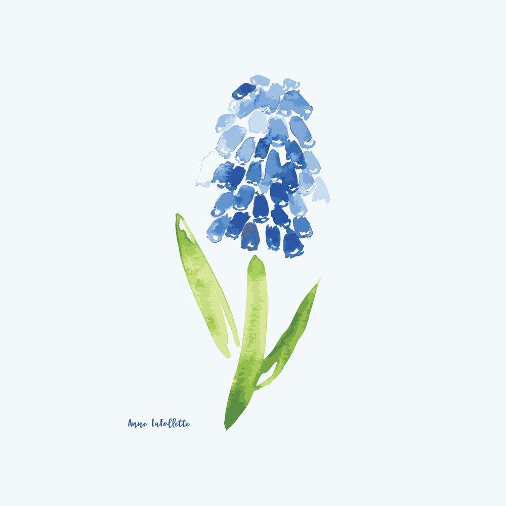 Muscari-flower.jpg