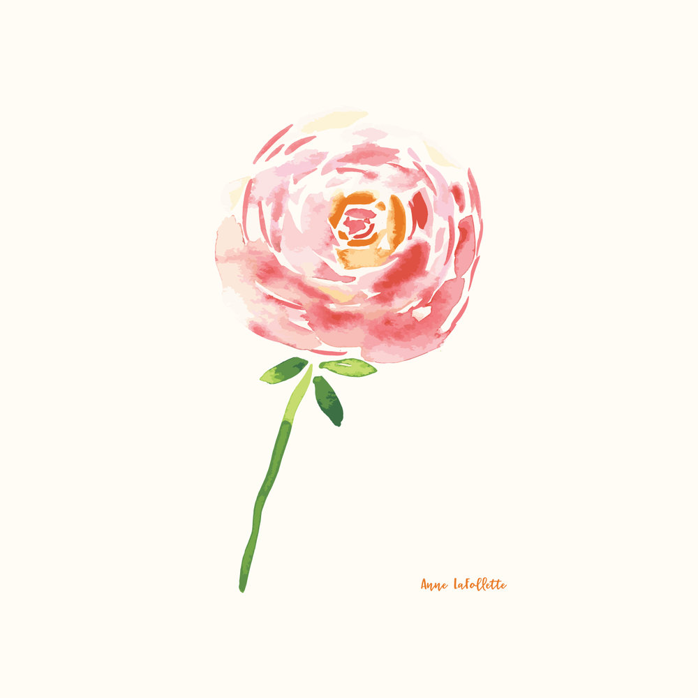 Watercolor-Ranunculus.jpg