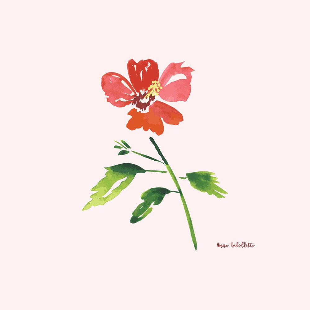 Hibiscus-1.jpg