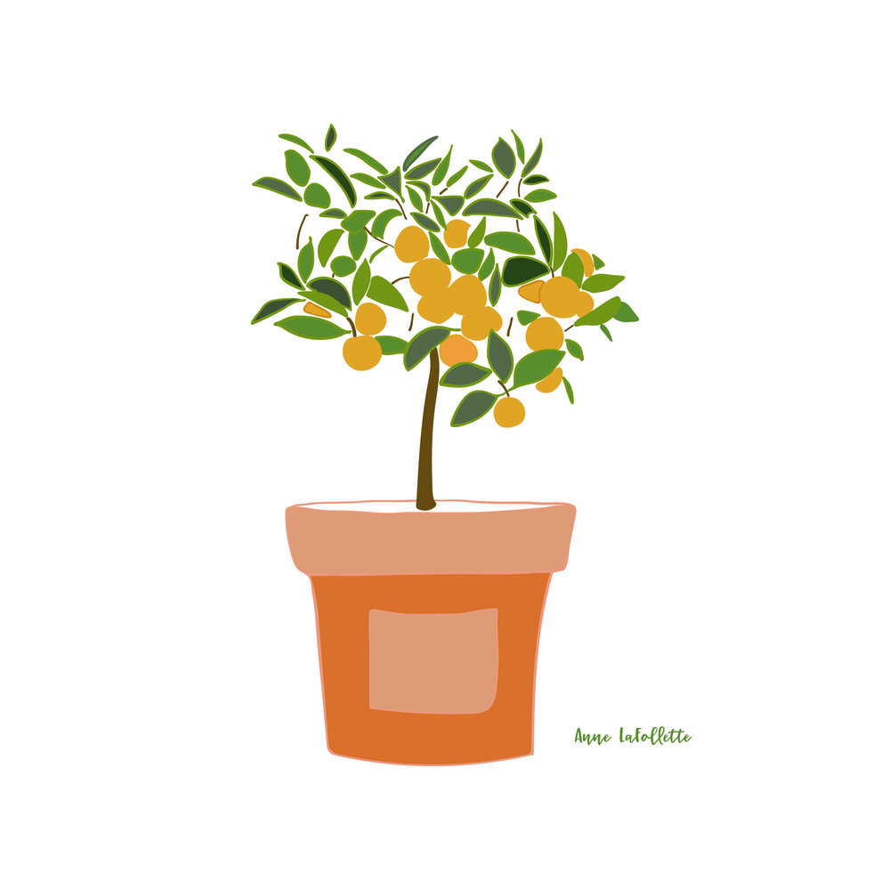 Orange-tree-in-terra-cotta-pot.jpg
