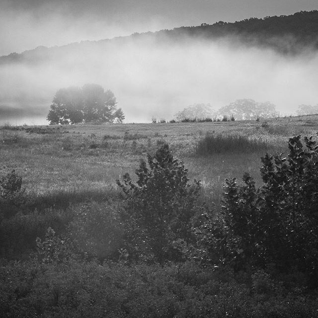 A beautiful morning mist around #middleburg . #middleburgva #middleburgmoment #blackandwhitephoto #bwphoto #canonphotography #canon7d