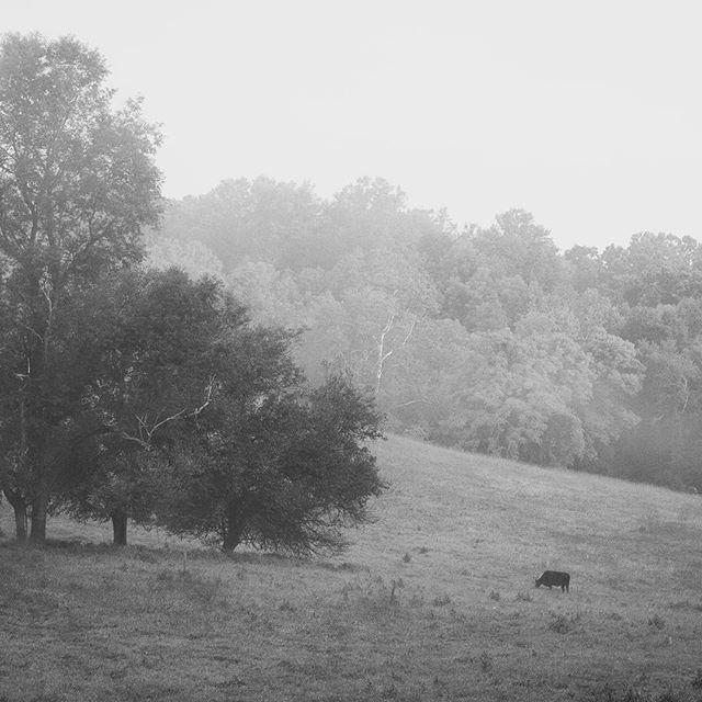 Misty #middleburg morning. #middleburgmoment #middleburgva #bwphoto