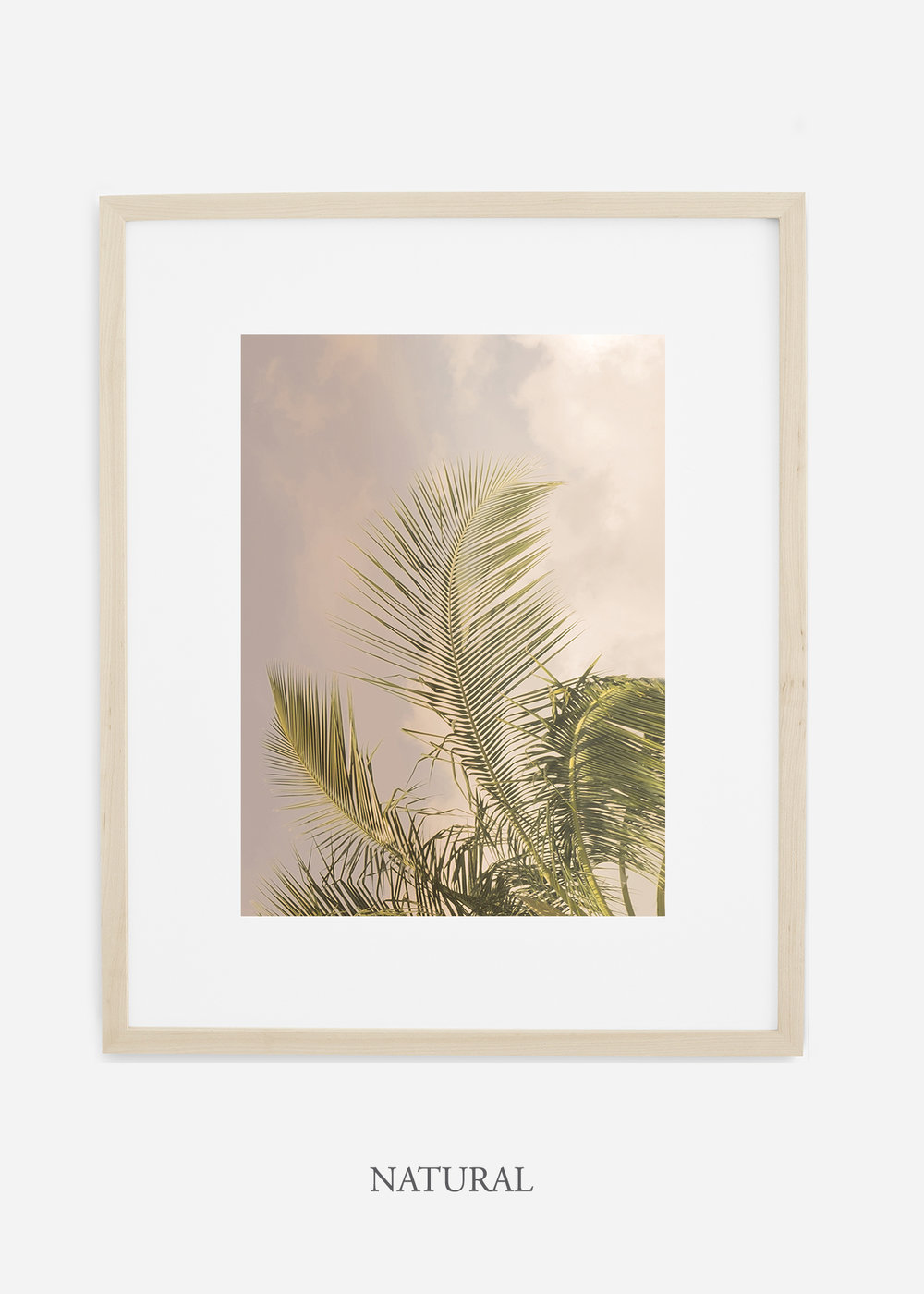 WilderCalifornia_PalmTree_Art_Photography_interiordesign_naturalframe.jpg