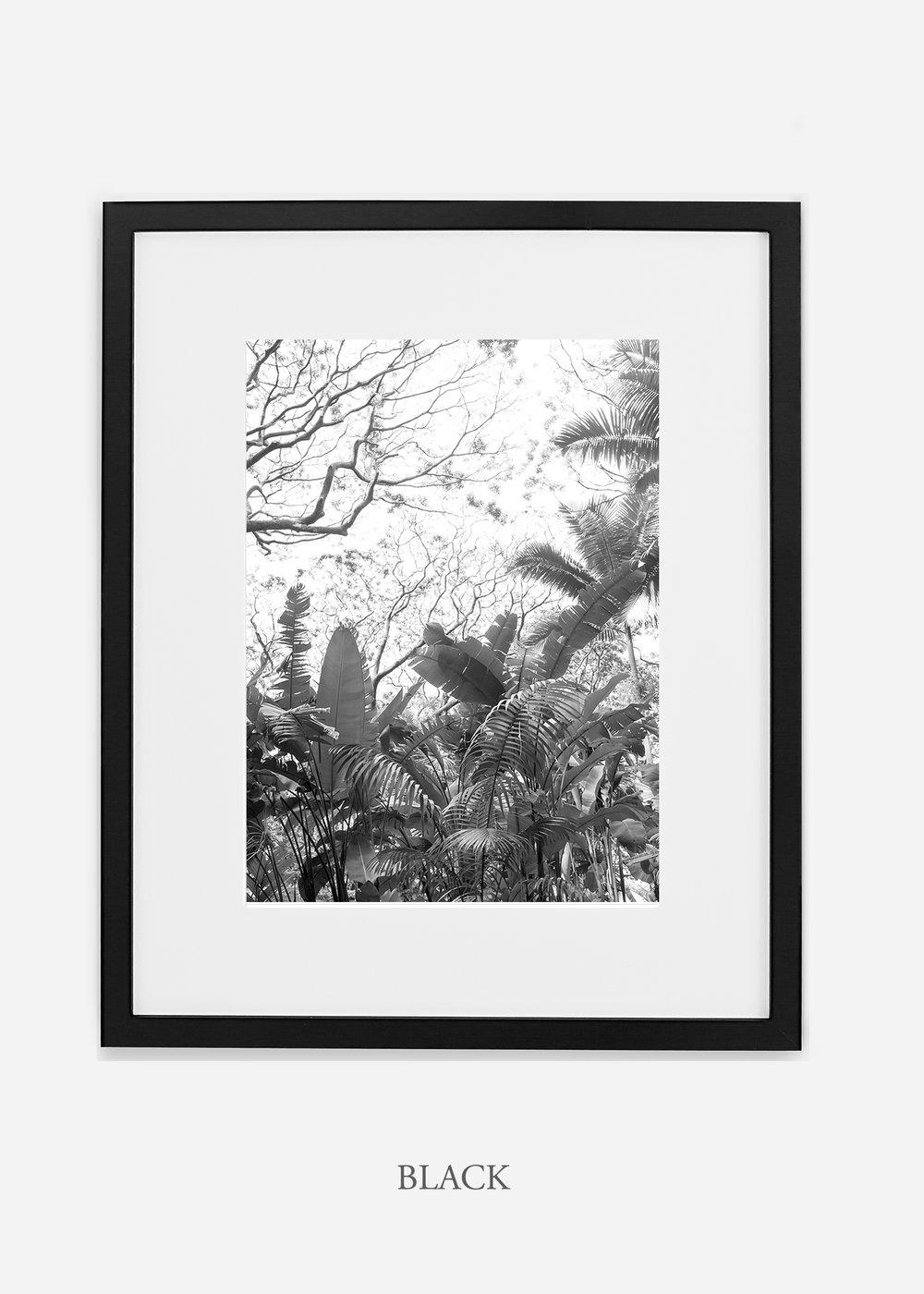 tropicaldecor_WilderCalifornia_TropicalRainforest2_Art_Photography_interiordesign_blackframe.jpg