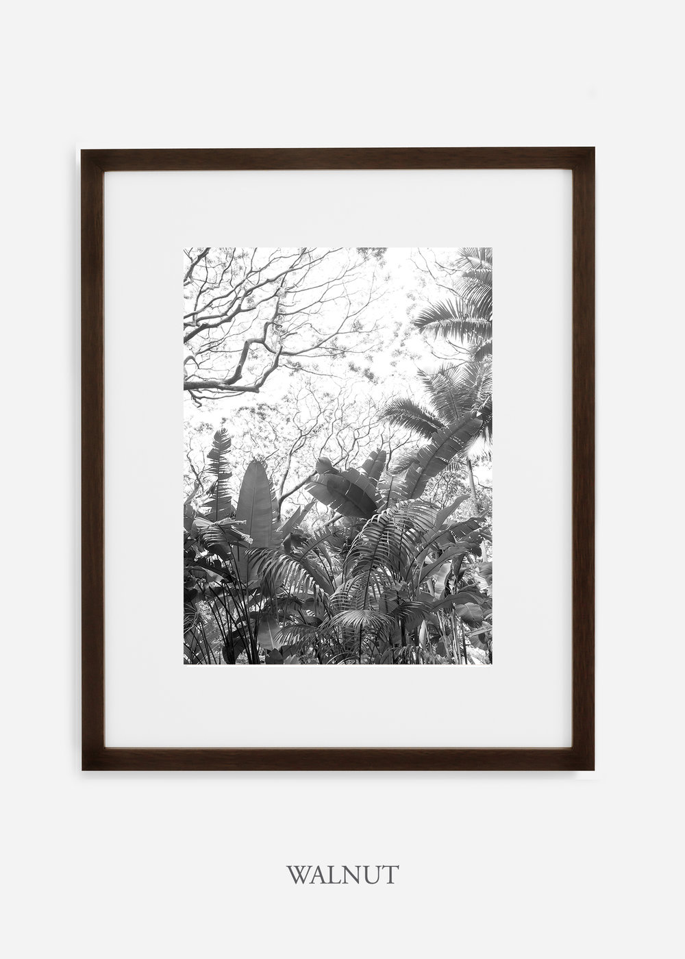 tropicaldecor_WilderCalifornia_TropicalRainforest2_Art_Photography_interiordesign_walnutframe.jpg