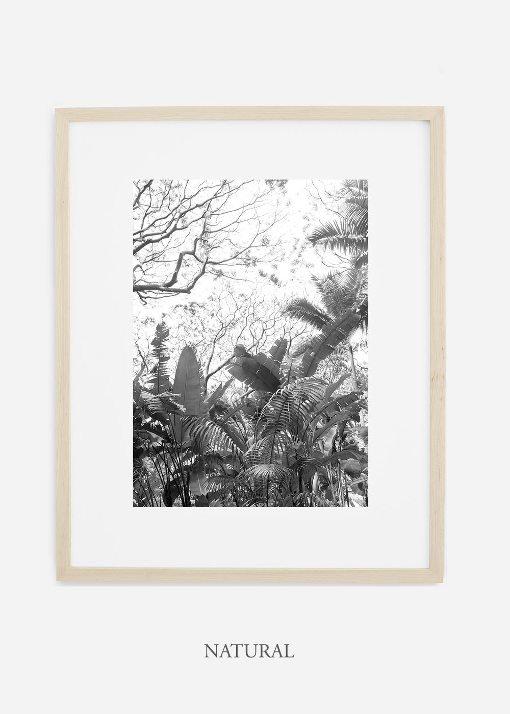 tropicaldecor_WilderCalifornia_TropicalRainforest2_Art_Photography_interiordesign_naturalframe.jpg