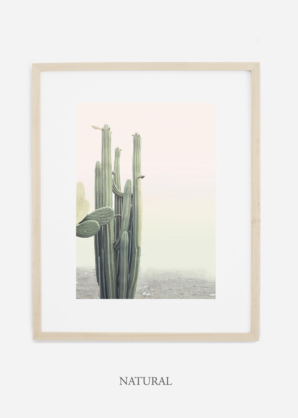 wildercalifornia_californiacactusNo.1_interiordesign_desertdecor_bohemian_naturalframe.jpg