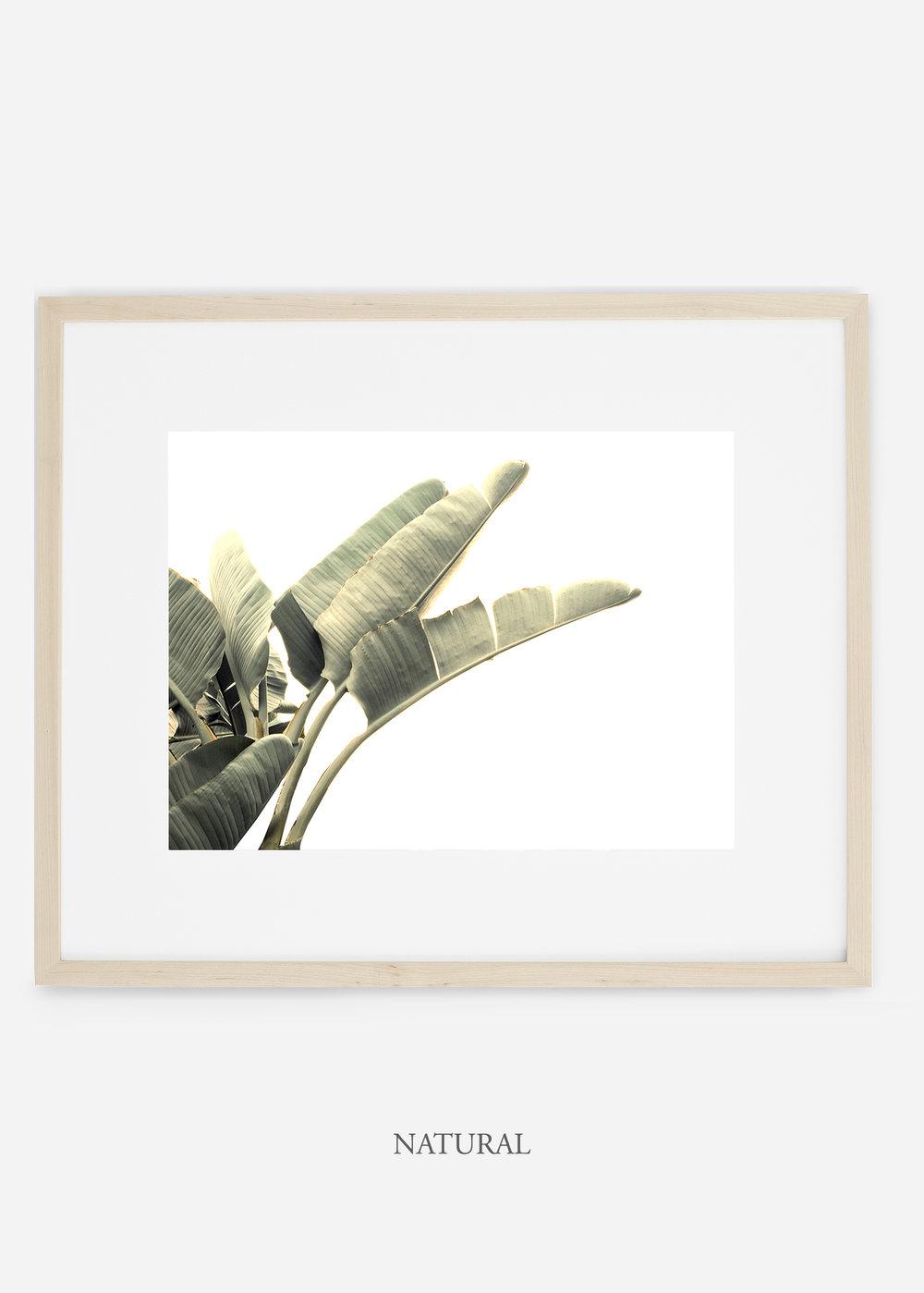 WilderCalifornia_interiordesign_art_naturalframe_BananaLeafNo.1_Mat.jpg