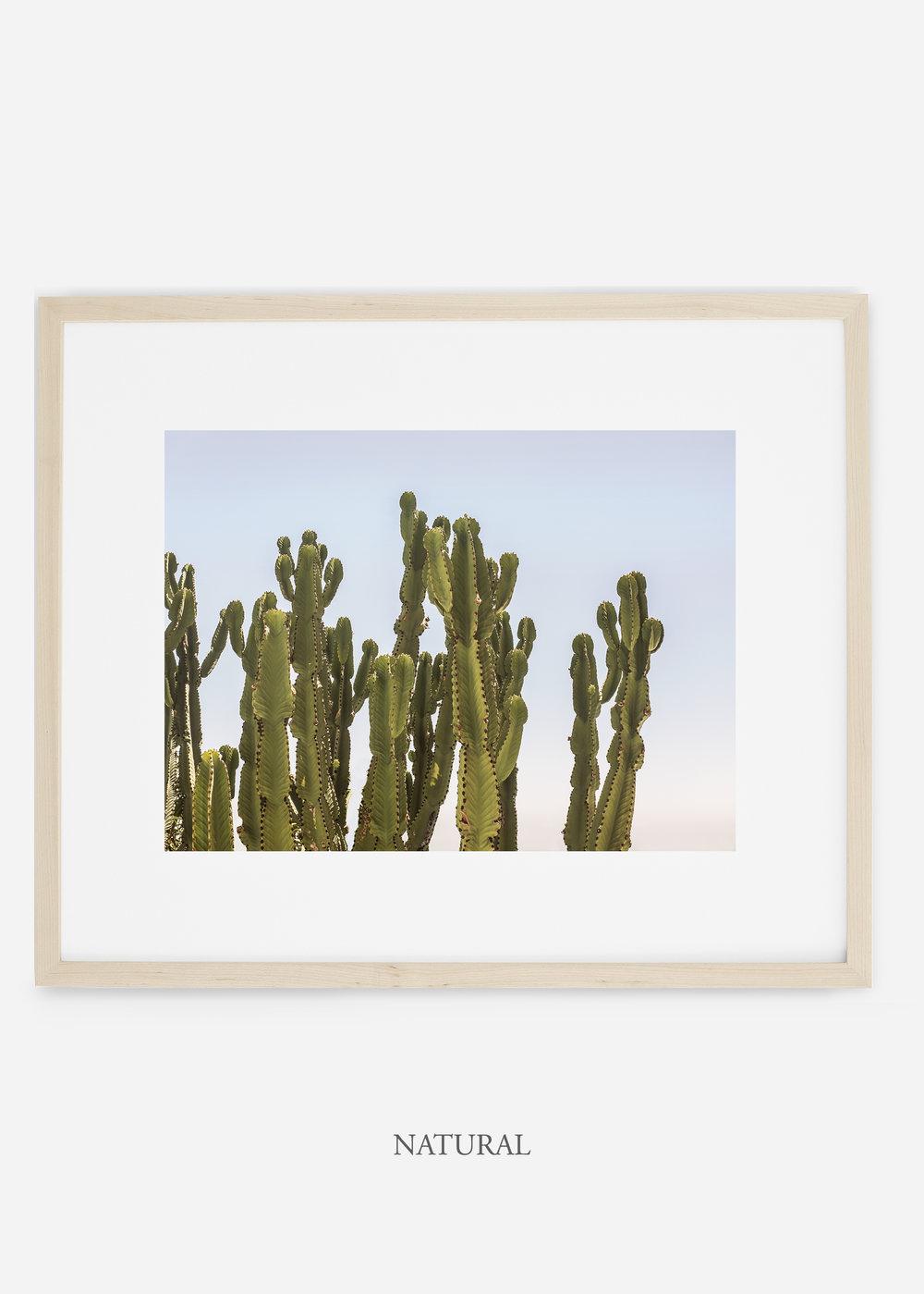 WilderCalifornia_naturalframe_interiordesign_cactusprint_CaiforniaCactusNo.3.jpg