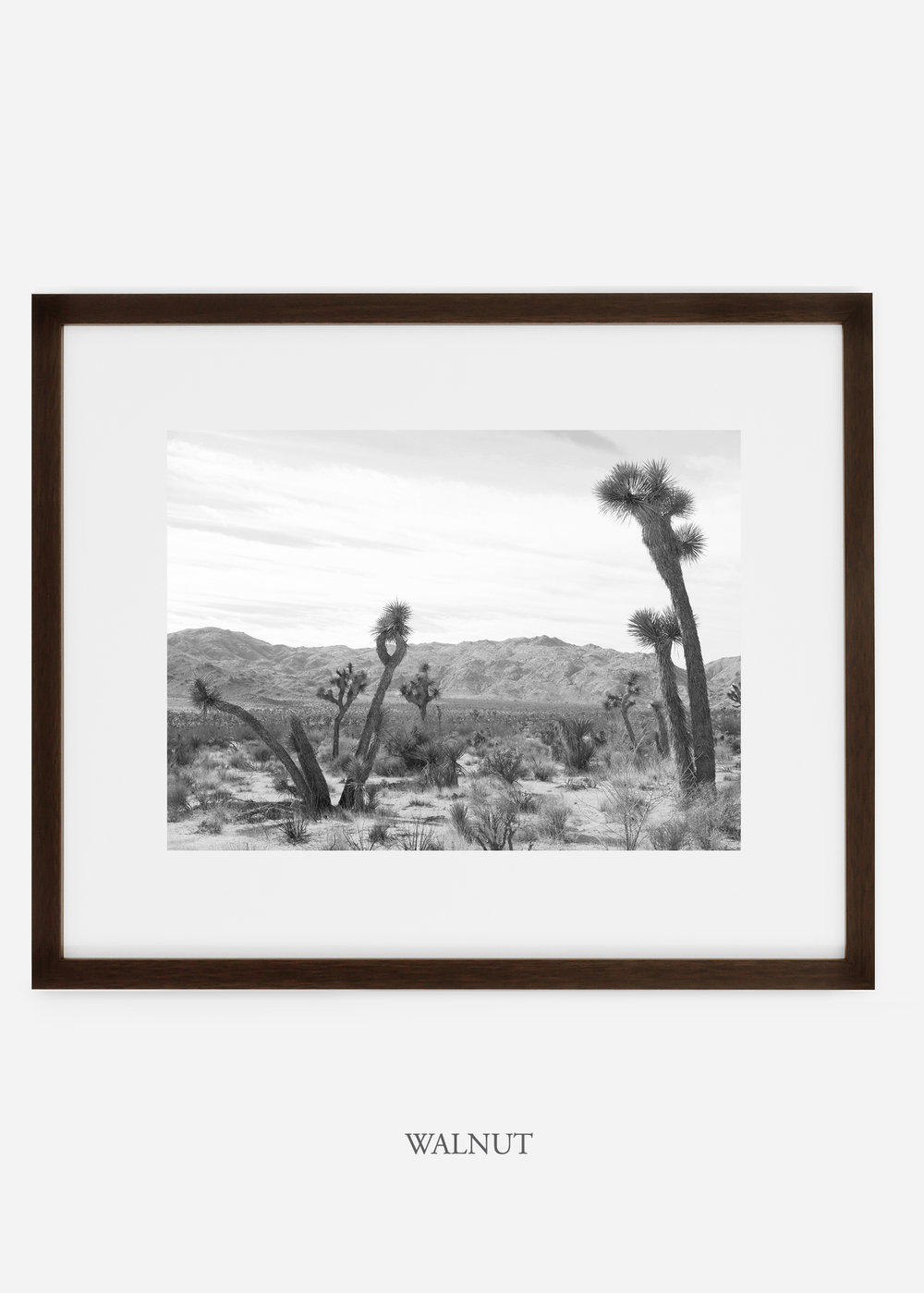 WilderCalifornia_walnutframe_JoshuaTree_No.4_interiordesign_cactusprint_art.jpg