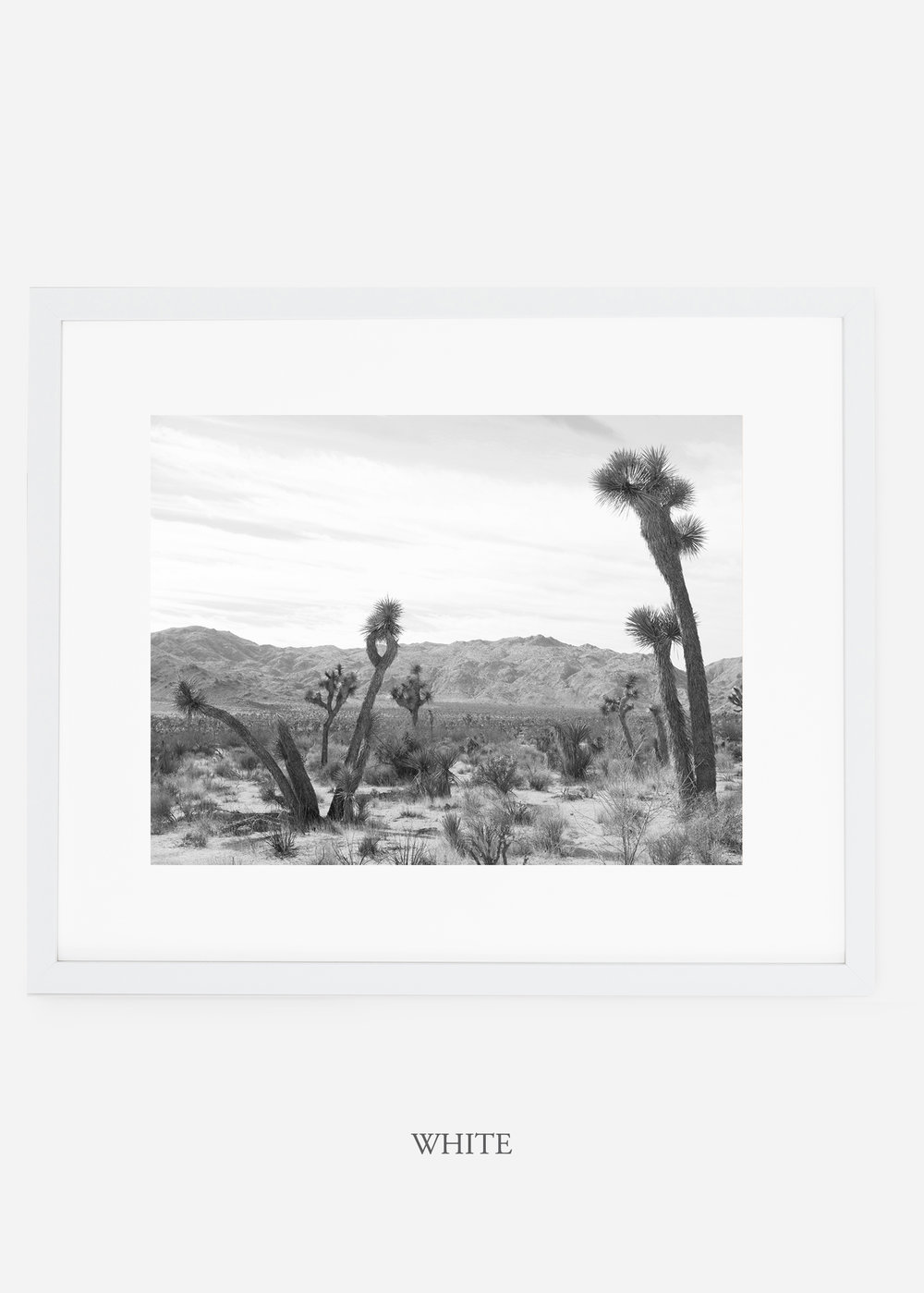 WilderCalifornia_whiteframe_JoshuaTree_No.4_interiordesign_cactusprint_art.jpg