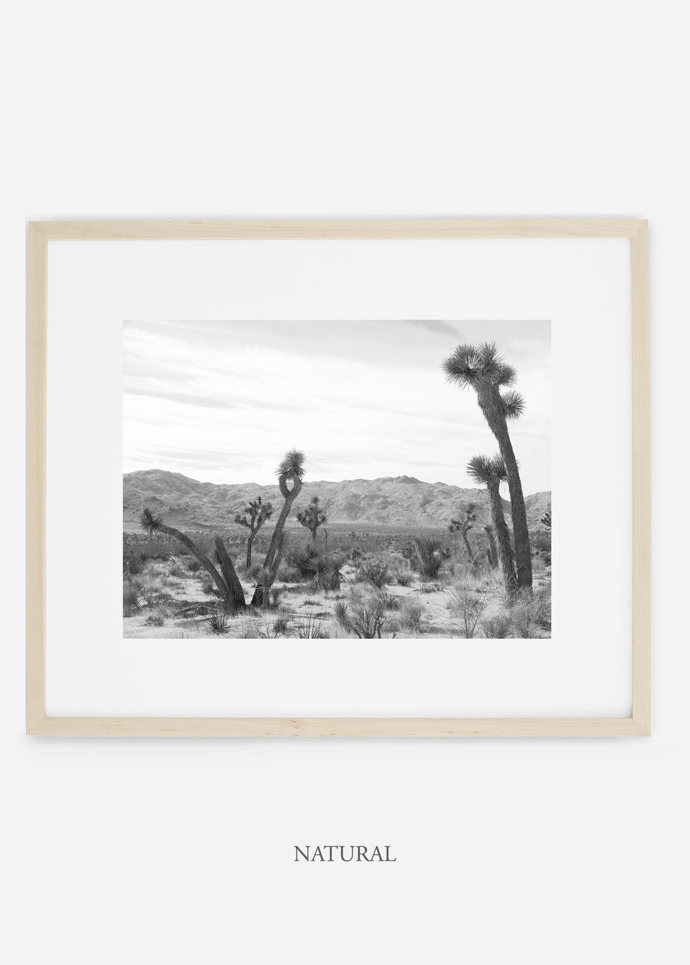WilderCalifornia_naturalframe_JoshuaTree_No.4_interiordesign_cactusprint_art.jpg