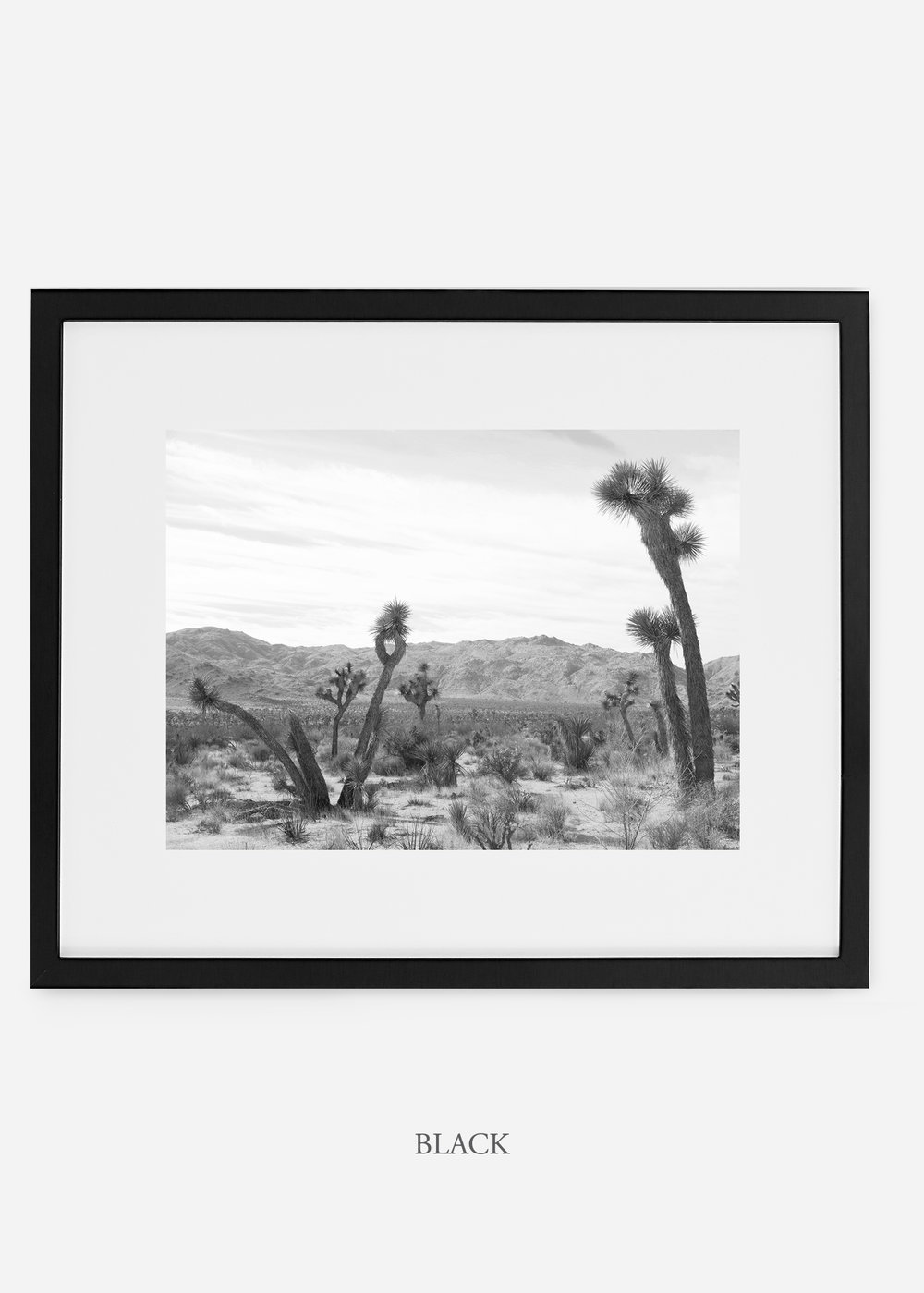 WilderCalifornia_blackframe_JoshuaTree_No.4_interiordesign_cactusprint_art.jpg