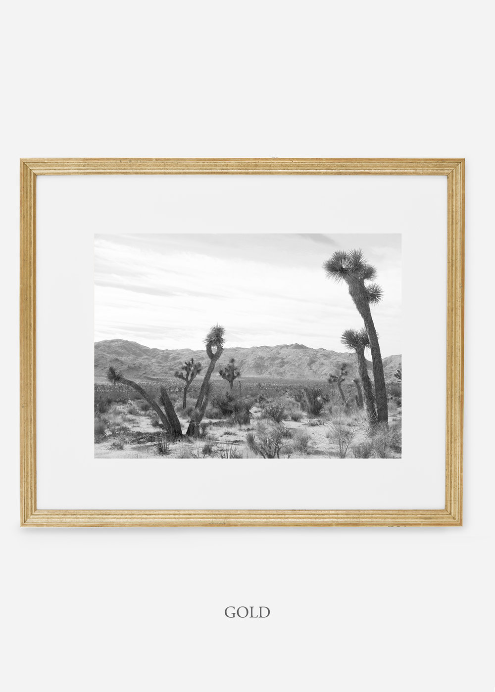 WilderCalifornia_goldframe_JoshuaTree_No.4_interiordesign_cactusprint_art.jpg