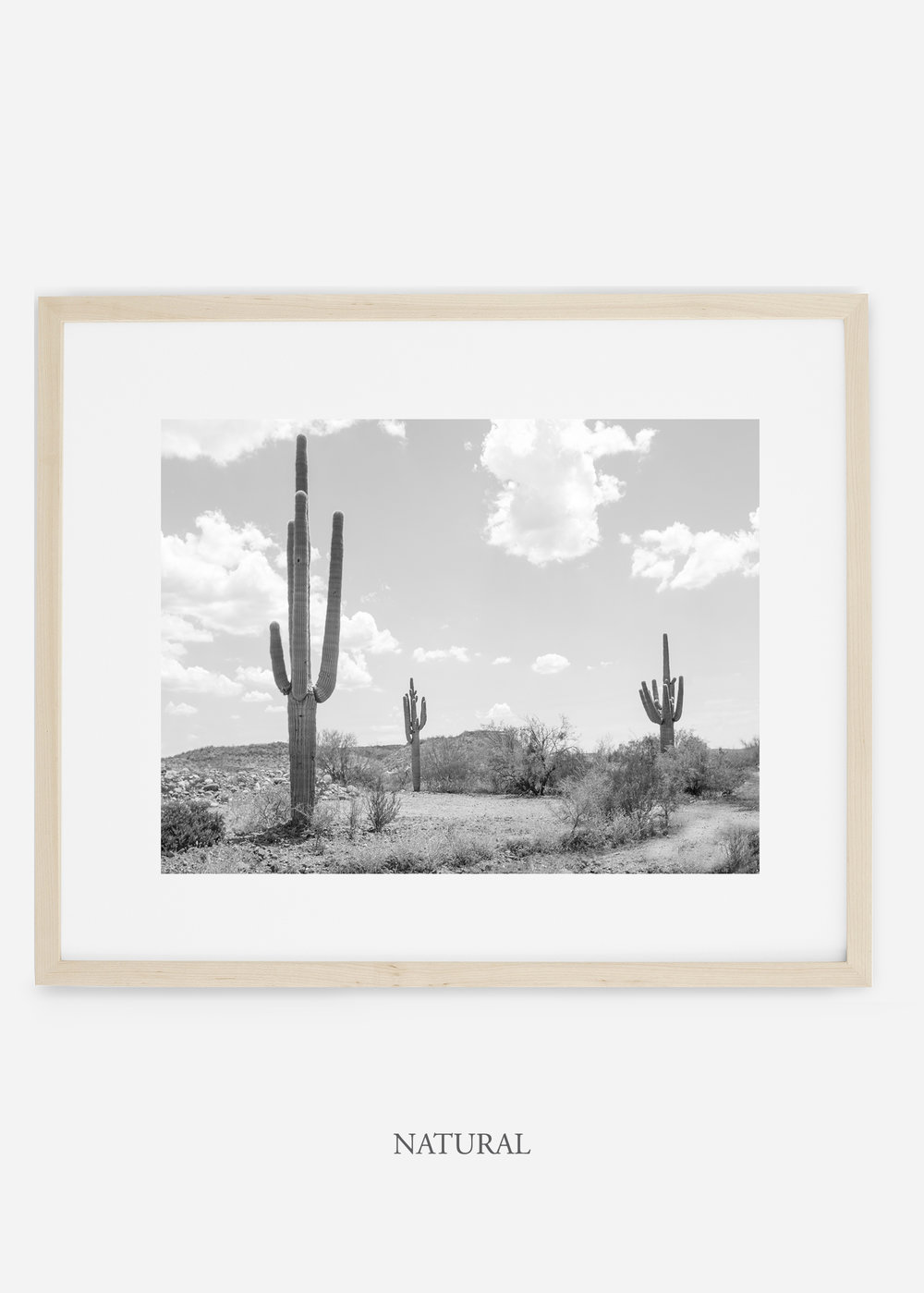 wildercalifornia_naturalframe_threesaguaro_cactus_art_interiordesign.jpg
