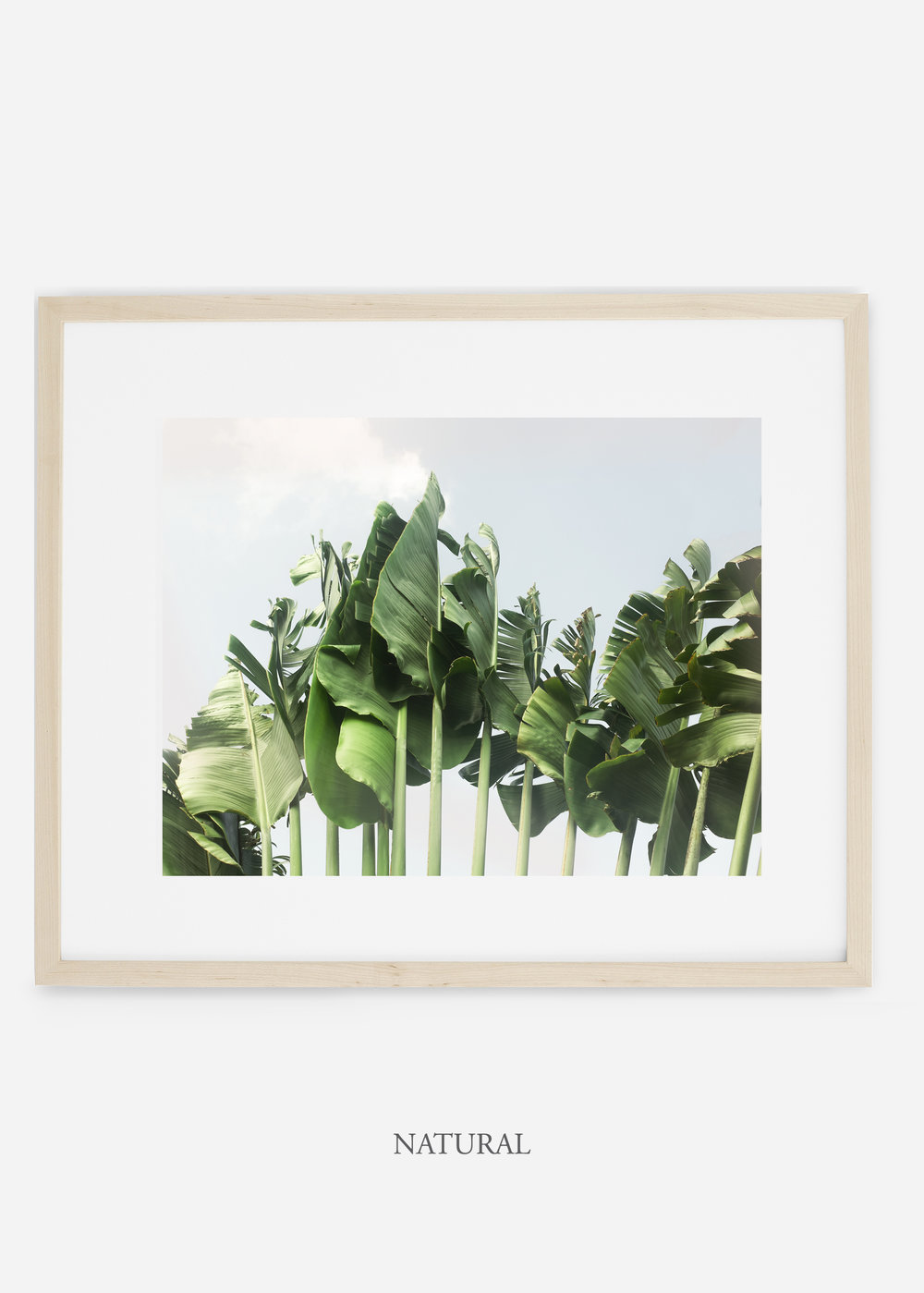 wildercalifornia_naturalframe_tulum_bananaleaf_No.1_minimal_cactus_art_interiordesign_blackandwhite.jpg