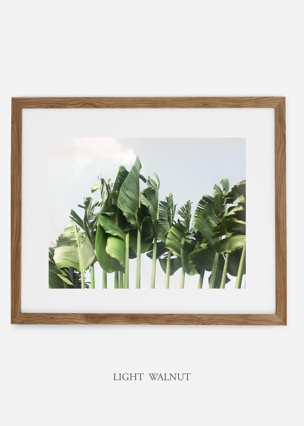 wildercalifornia_lightwalnutframe_tulum_bananaleaf_No.1_minimal_cactus_art_interiordesign_blackandwhite.jpg