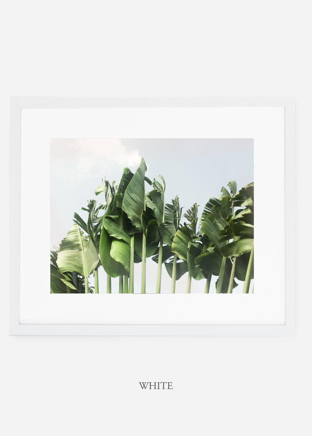 wildercalifornia_whiteframe_tulum_bananaleaf_No.1_minimal_cactus_art_interiordesign_blackandwhite.jpg