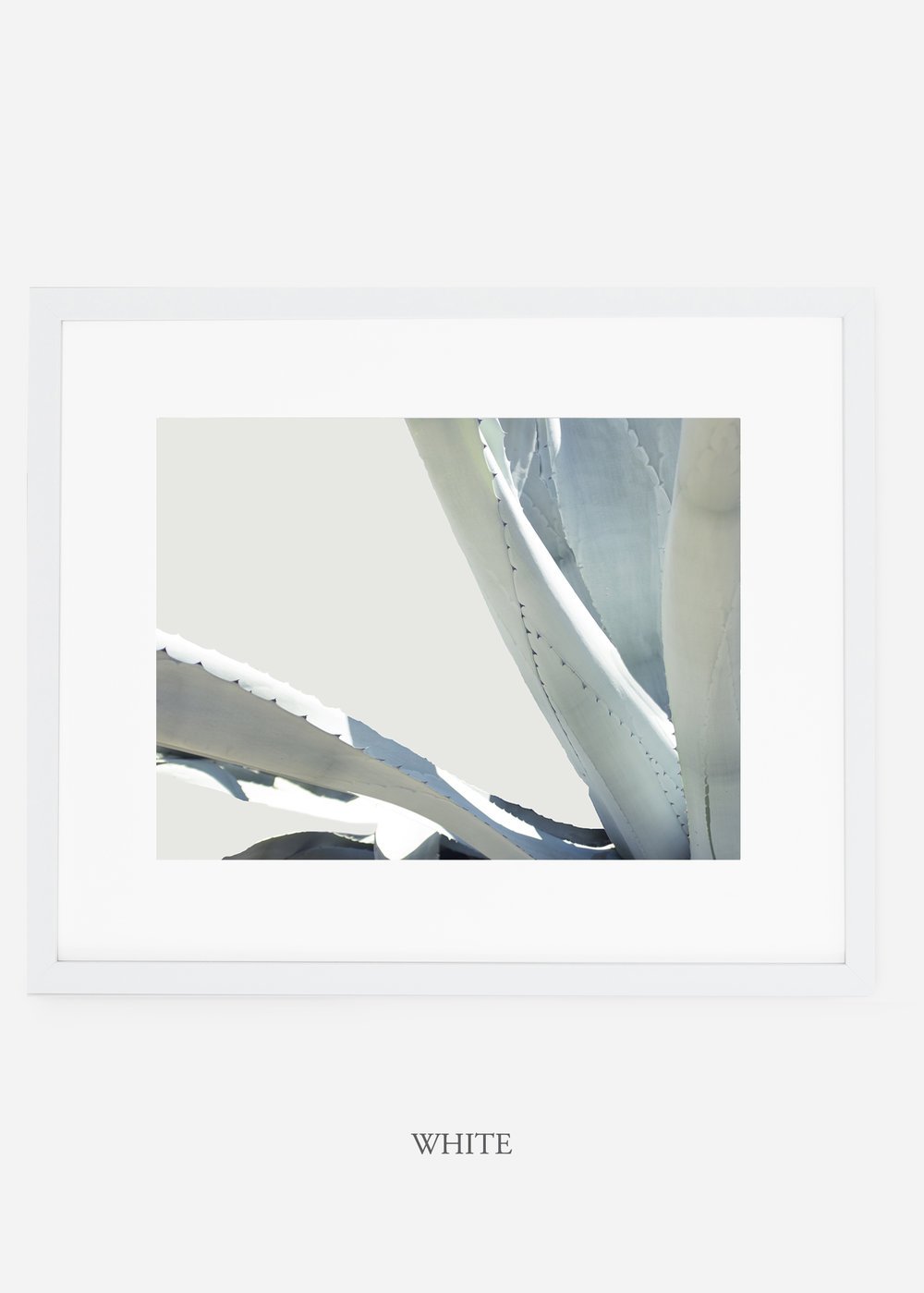 WilderCalifornia_whiteframe_WinterWhite_No6_Art_Photography_interiordesign_agave.jpg