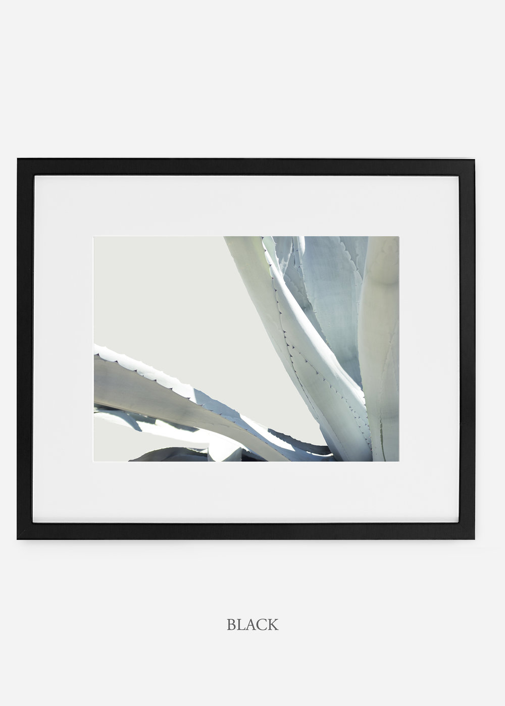 WilderCalifornia_blackframe_WinterWhite_No6_Art_Photography_interiordesign_agave.jpg