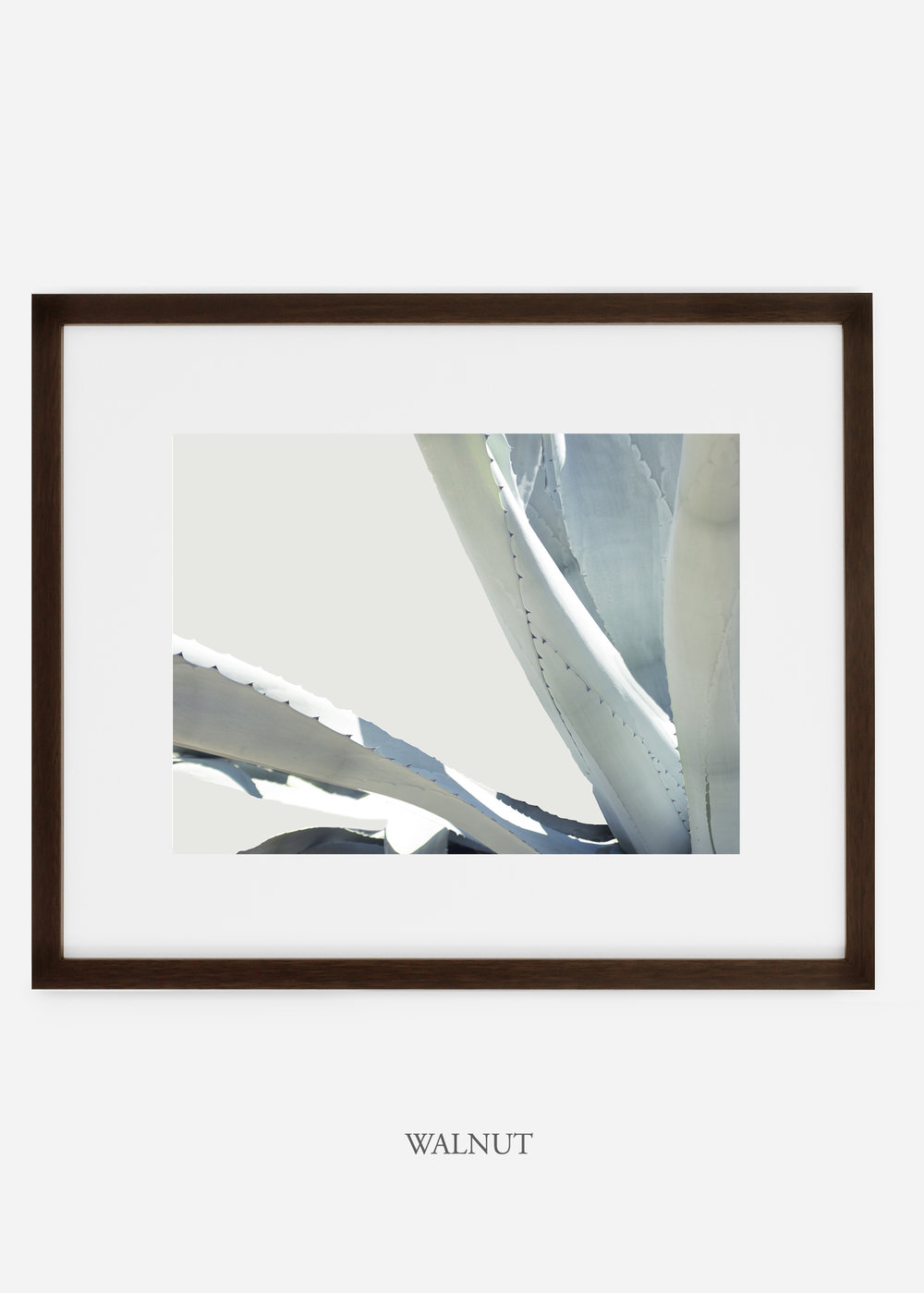 WilderCalifornia_walnutframe_WinterWhite_No6_Art_Photography_interiordesign_agave.jpg
